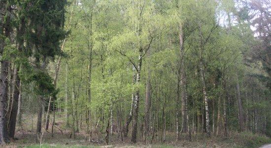 >Natur