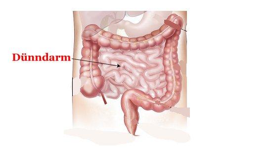 Körperorgane